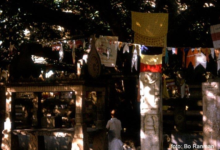 I Bodhi-trädet djupa skuggaI Bodhi-trädet djupa skugga