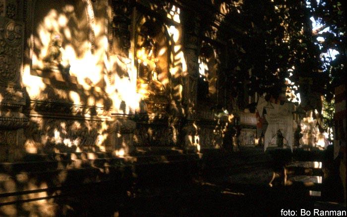 I Bodhi-trädet djupa skugga